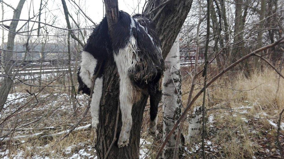 U mrtvé kočky zavěšené na strom není jasné, co způsobilo její smrt.