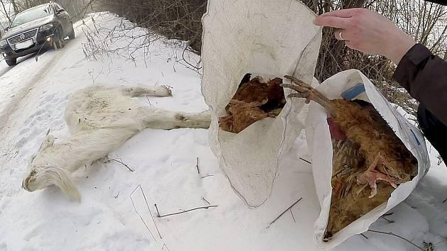 Mrtvá zvířata kdosi vyhodil v lese za Orlovou.