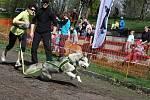 Pohodové a příjemné dopoledne pro všechny zúčastněné lidi i psy. Takto vypadaly sobotní závody v canicrossu v bohumínském areálu Gliňoč.