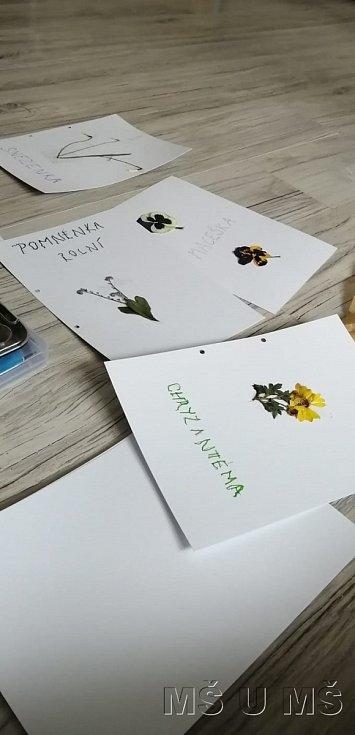 Děti vyráběly svůj první herbář.