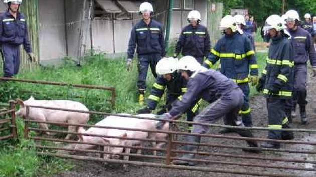 Desítky hasičů z okresu i kraje trénovalo tento týden evakuaci vepřína v Chotěbuzi.