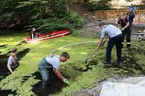 Orlovská radnice by v místním odpočinkovém lesoparku měla ráda i čistý rybníček. Už roky zde ale prohrává boj s rostlinkou okřehek, která se roztahuje po vodní ploše.