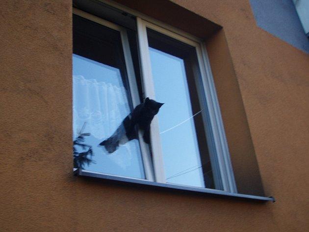 Hasiči v Českém Těšíně zachraňovali kočku, která uvízla v okně.