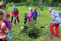 Mladí ochránci přírody z Havířova-Bludovic vysadili jehličnany v nově zakládaném arboretu.