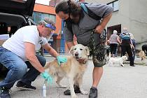 Očkování psů v Orlové
