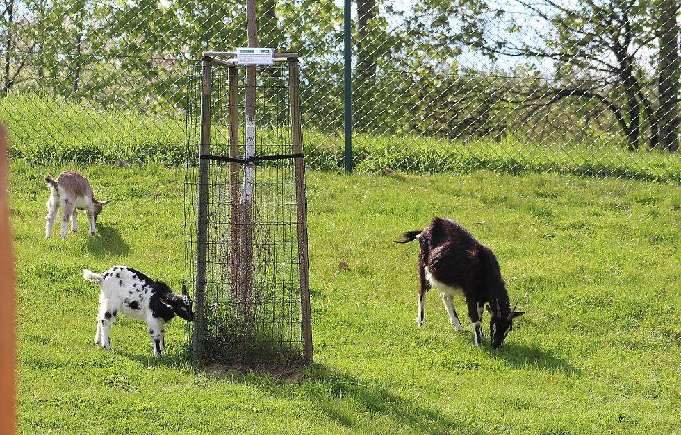 Spoustu atrakcí pro děti a pohodové zázemí pro jejich rodiče nabízí Park Dakol v Petrovicích u Karviné. Velkou atrakcí je bezesporu kontaktní mini zoo, kde si děti mohou vzít zvířata do ruky.