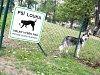 Vyhláška určí nová místa pro volný pohyb psů
