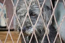 Mnozí psi zažívají na Silvestra deprese a strach.
