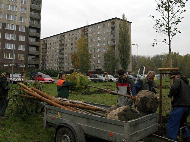 Výsadba izolační zeleně v Bohumíně.