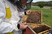 Obce na Karvinsku pomáhají včelařům, ti trpí obrovskými úhyny včelstev. Ilustrační foto.