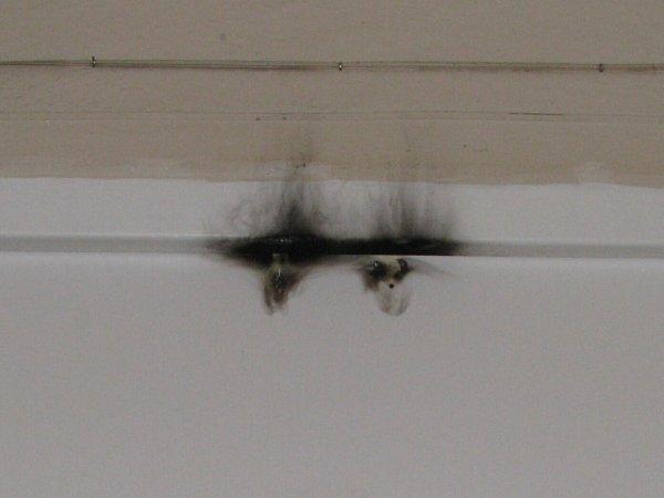 Pachatel poškodil dveře bytu.