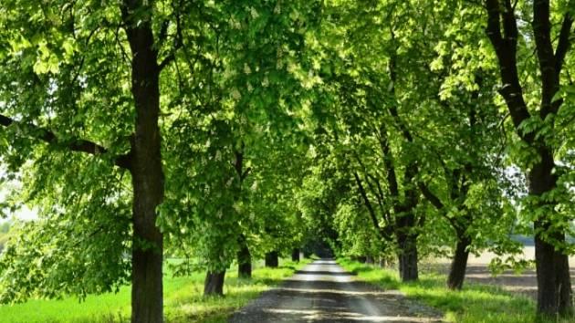 Jednou z alejí, která se uchází o vaši přízeň, je Jírovcová alej ze Stonavy do Albrechtic.