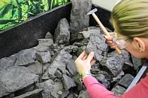 Výstava Zkamenělý život.