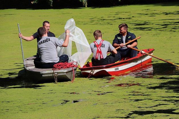 Orlovská radnice by vmístním odpočinkovém lesoparku měla ráda ičistý rybníček. Už roky zde ale prohrává boj srostlinkou okřehek, která se roztahuje po vodní ploše.