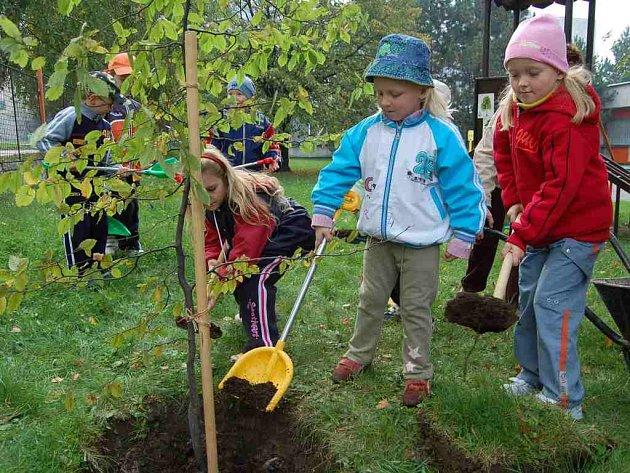 Možná svůj první strom v životě si včera zasadily děti z Mateřské školy Okružní v Orlové na školní zahradě.