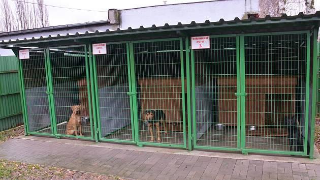 V karanténě je v těchto dnech celý bohumínský psí útulek, kde se již po druhé v krátké době objevila mezi psíky nakažlivá parvoviróza.