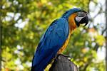 Havířovský papoušek v celé své kráse.