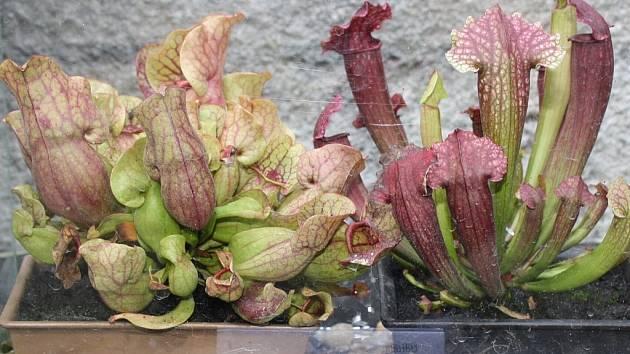 Výstavu zahrádkářského svazu Zahrada 2014 v Karviné  je možno navštívit také během soboty 6. září od 9 do 18 hodin.