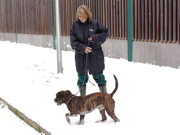 Pracovnice havířovského útulku pro zvířata Max s jedním ze psů, kteří nuceně pobývají v tomto zařízení.