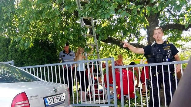 Záchrana zraněného muže po pádu ze stromu.