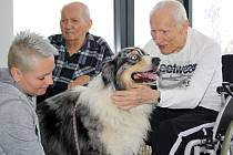 Canisterapie v domově seniorů GrandPark v Havířově.