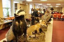 Výstavka vycpané lesní zvěře je instalována v havířovské knihovně.