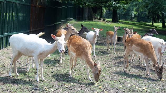 Karvinský zoo koutek v parku Boženy Němcové.