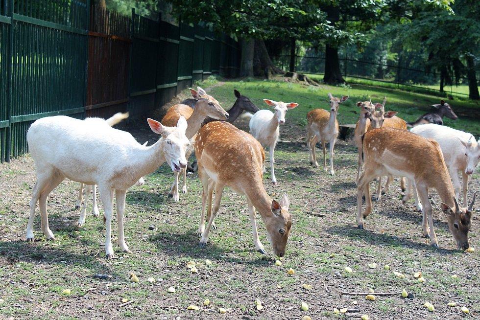 Karvinský zoo koutek v parku Boženy Němcové je nyní plný mláďat, na některá si ale návštěvníci musí počkat, protože je jim zatím lépe ve vnitřních ubikacích.
