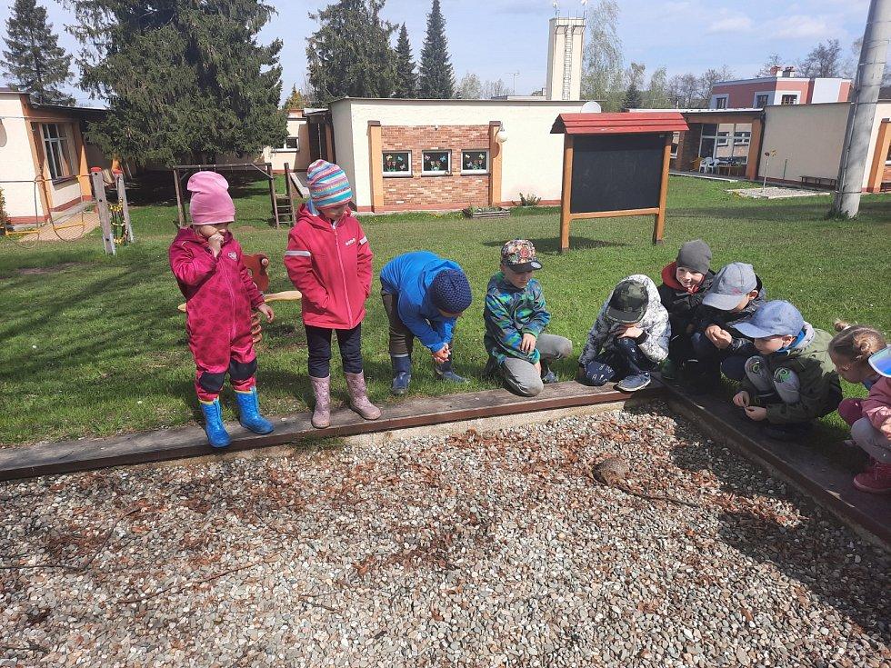 Pozorování ježka na školní zahrádce.