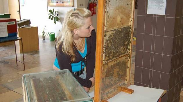 Včelaři vystavují.