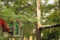 Mohutný strom s prasknutým kmenem museli skácet dřevorubci.
