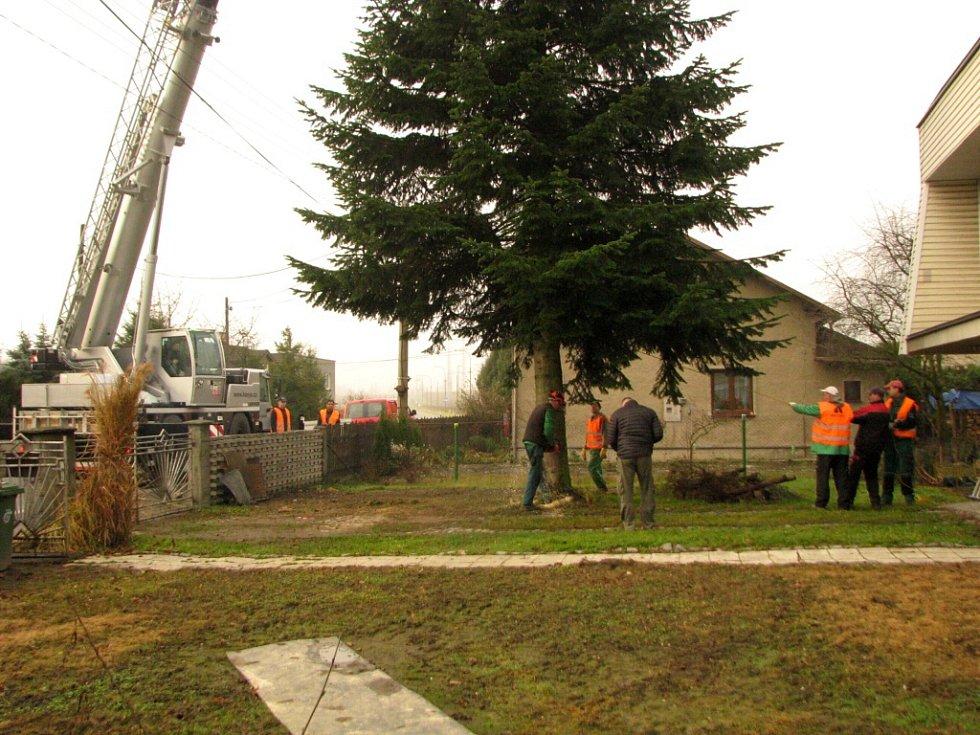 Stavění vánočních stromů v Havířově. Kácení jedle v soukromé zahradě v Životicích.