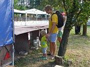 Výstava králíků a drobného zvířectva v Karviné.