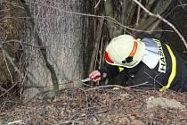 Hasič kontroluje řezem poškozený strom.