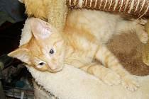 Kočky všeho druhu se těší na vaši návštěvu v Bohumíně.