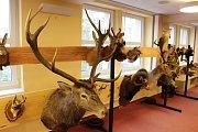 Výstavka vycpané lesní zvěře v havířovské knihovně.