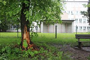Na několika místech v Karviné neznámý vandal poškodil stromy. Kdo to byl, zjišťuje policie.