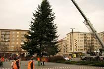 Stavění vánočních stromů v Havířově. Jedle na náměstí Republiky.
