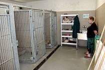 V havířovském útulku pro zvířata provozují nově také psí hotel.