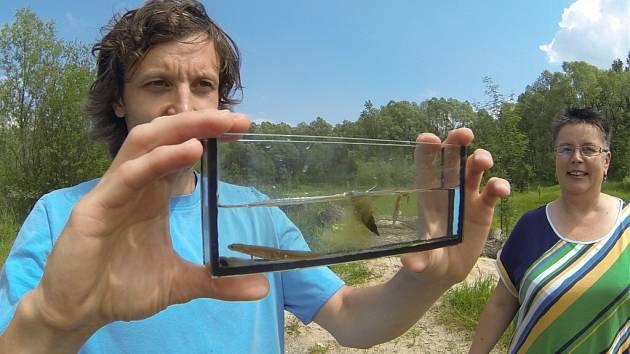 Chráněná přírodní památka Mokřad u Rondelu v Havířově. Filip Šálek z Agentury ochrany přírody a krajiny ukazuje živočichy z chráněné lokality.