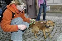 Majitelé psů z Orlové zaplatí za zvíře od nového roku vyšší poplatek.