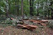 Pondělní noční vichřice převracela stromy také v parku Boženy Němcové. Park je z bezpečnostních d