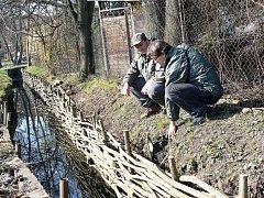 Petr Nestrašil a Daniel Křenek si prohlížejí další část zpevněného břehu potoka vrbovým výpletem.