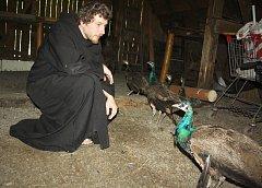 Bratr Jan František Teister při vypouštění mladých pávů z klášterních zahrad. Pávy daroval klášter z Rajhradu a ti nyní budou žít v parku Boženy Němcové v karvinském Fryštátu.