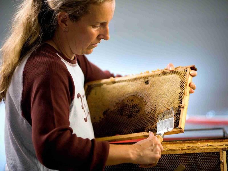 Celý postup stáčení medu zachytil svým objektivem Jiří Hanzel.