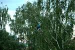 Papoušek se na konci června usadil na větvi stromu v havířovském dvorku.