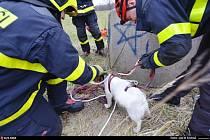 Hasiči z Karvinska zachraňovali psa z hluboké betonové šachtice.