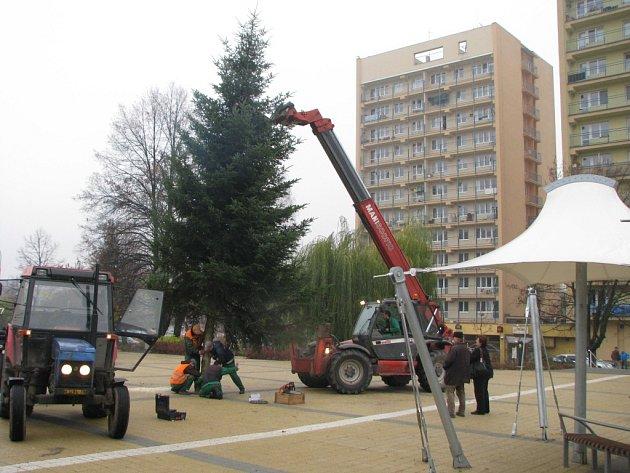 Stavění vánočního stromu na novém náměstí na Terase.