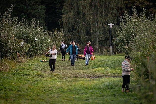 Samosběr jablek vsadech Životice, 10.října 2020vHavířově-Životicích.
