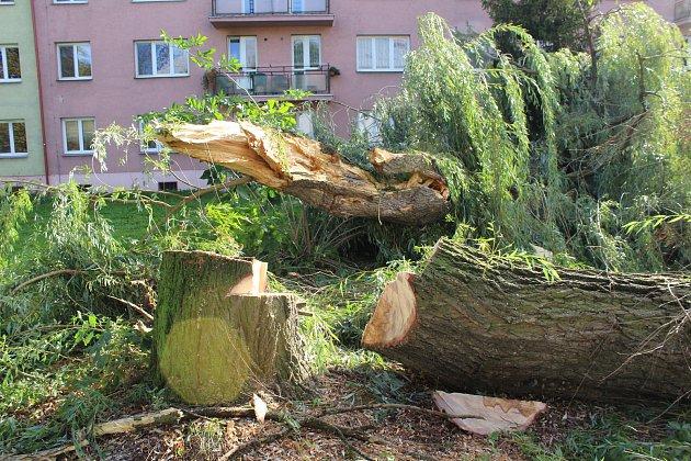 Silný noční vítr zneděle na pondělí zlomil několik vzrostlých stromů vkarvinských  ulicích.